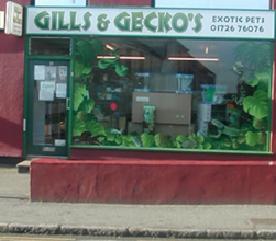Gills And Geckos shop